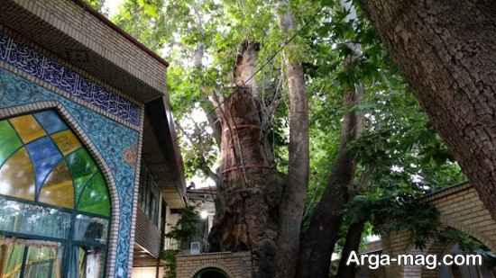 روستای زیبای برغان