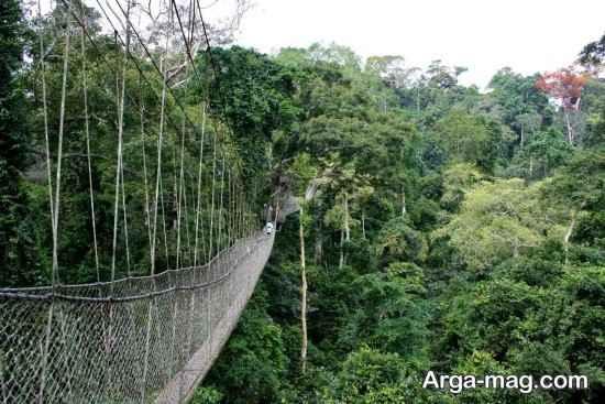 جنگل های غنا