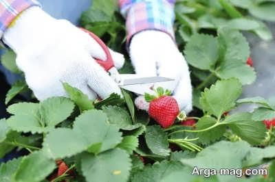 انواع میوه های آلرژی زا