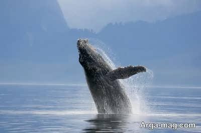 خصوصیات اخلاق و رفتاری حیوان نهنگ