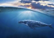 آشنایی با حیوان نهنگ