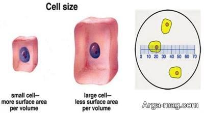 اندازه سلول چقدر است؟
