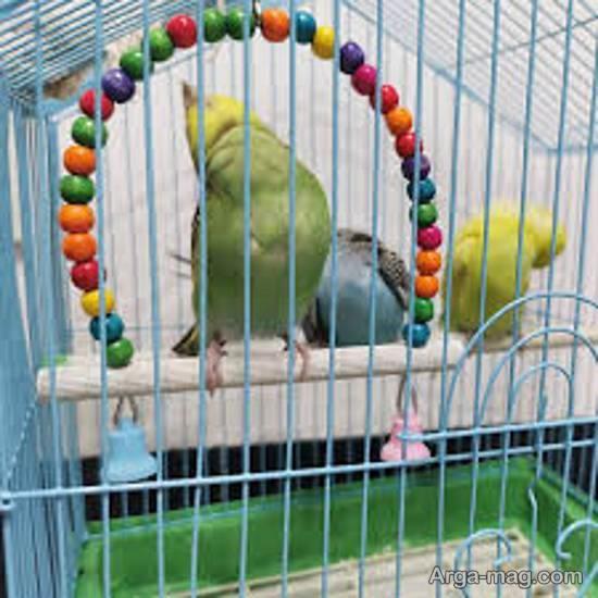 ایده هایی زیبا و جذاب از تزیین قفس پرنده