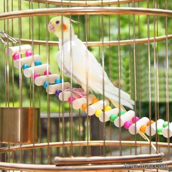 ایده هایی لوکس و متنوع از دیزاین قفس پرنده