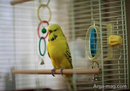 مجموعه ای متفاوت از دیزاین قفس پرنده برای تمامی سلیقه ها