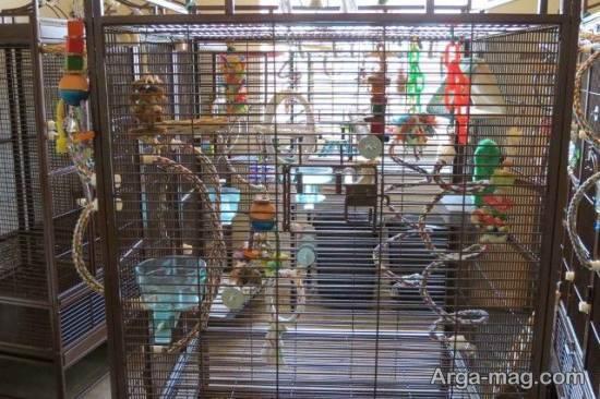 ایده هایی زیبا و شیک از تزیینات قفس پرنده