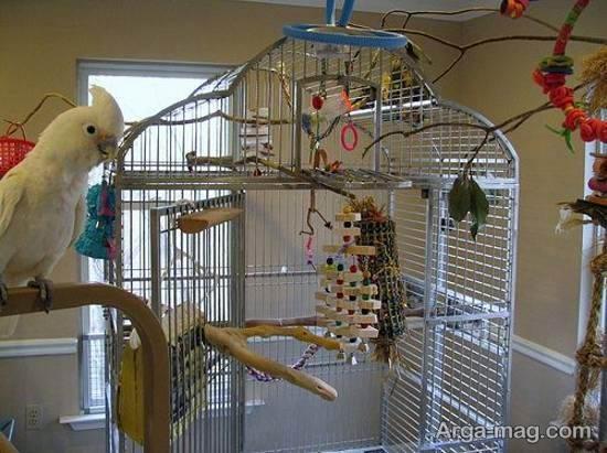 مجموعه ای لاکچری و لوکس از ایده ها برای دیزاین قفس پرنده
