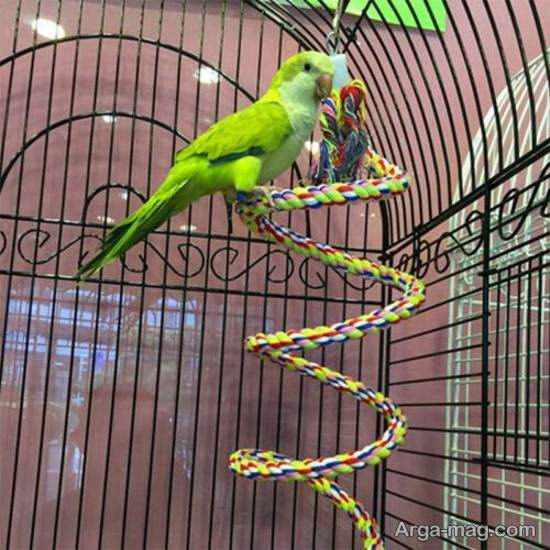 ایده هایی زیبا و متنوع از تزیین قفس پرنده