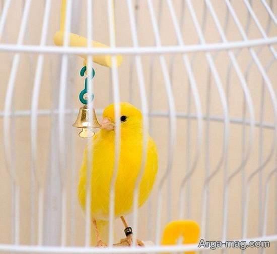 نمونه هایی ایده آل و متنوع از تزیینات قفس پرنده