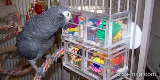 مجموعه ای بینظیر و جذاب از تزیینات قفس پرنده