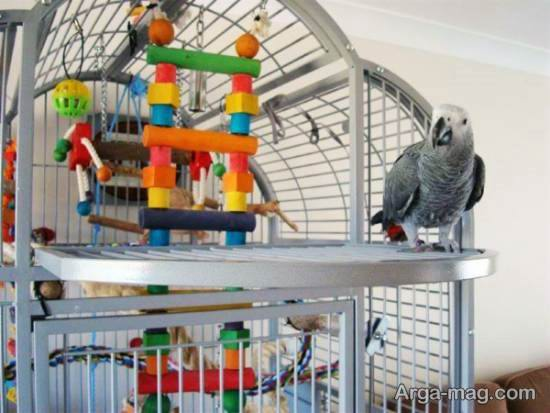 مجموعه ای بینظیر از تزیینات قفس پرنده