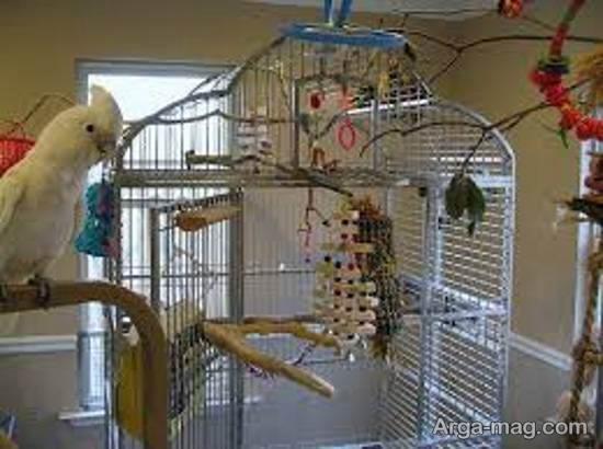 مجموعه ای فوق العاده از دیزاین قفس پرنده