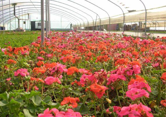 خاک مناسب برای پرورش گل کدام است؟