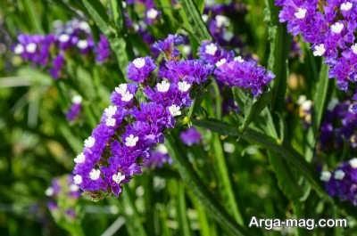 دستورالعمل کاشت بذر زنبوری