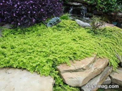 معرفی گیاهان پوششی و شرایط مناسب کاشت آن ها