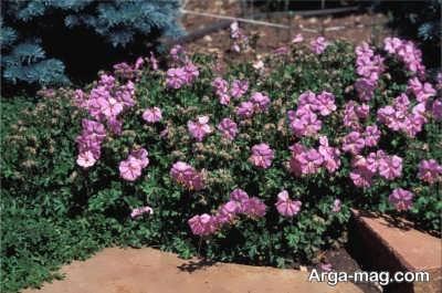 شرایط کاشت گیاهان پوششی