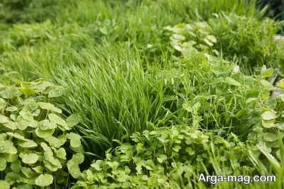 انواع گیاهان پوششی