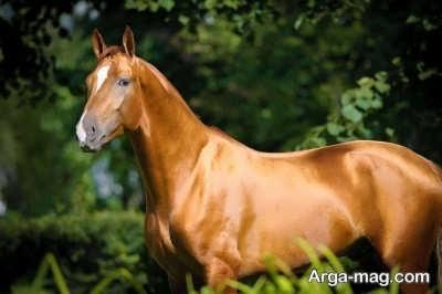 تاثیر مصرف شیر اسب چیست؟
