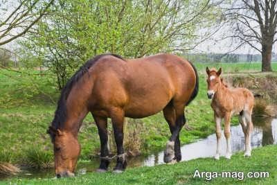 خواص شیر اسب به چه صورت است؟