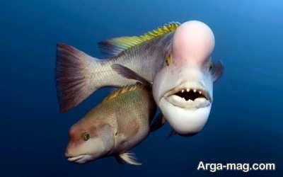 آشنایی با ماهی های مرکب
