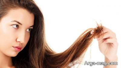 کوتاهی به موقع مو ها می تواند برای جلوگیری از موخوره مفید باشد.