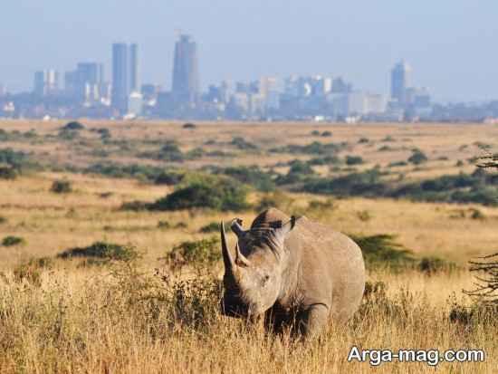 دیدنی های مهم کنیا
