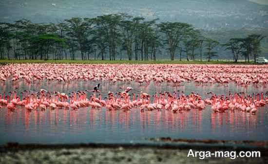دریاچه کنیا