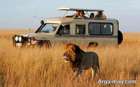 حیات وحش کنیا