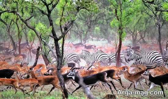 طبیعت سودان