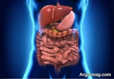 معرفی اندام های سیستم گوارشی