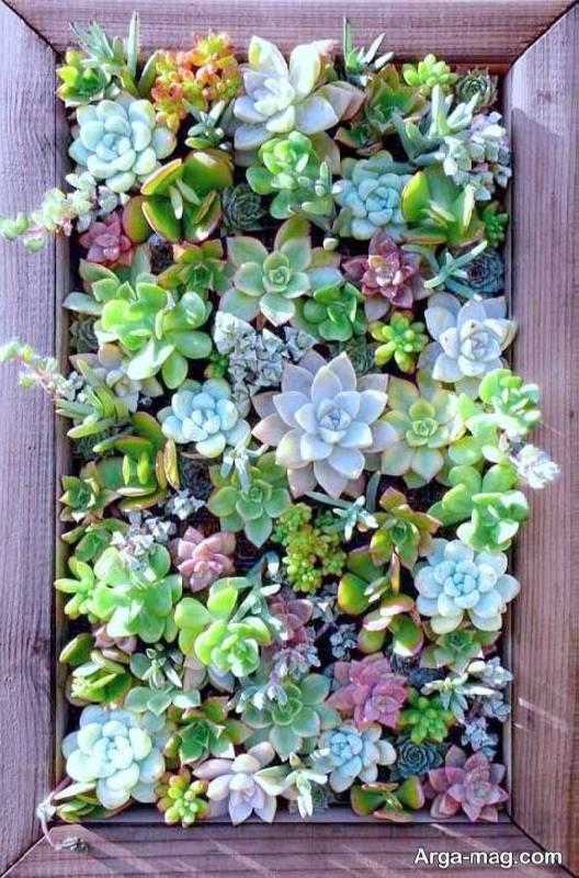 آموزش ساخت باغچه دیواری به دو روش دوست داشتنی