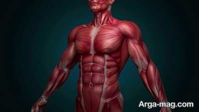 انواع عضلان بدن