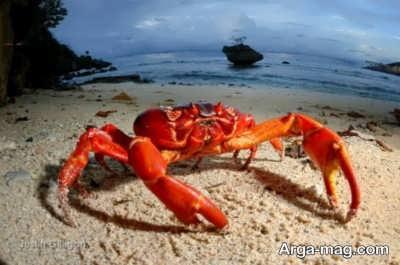 نمونه عکس از حیوان خرچنگ در دریا