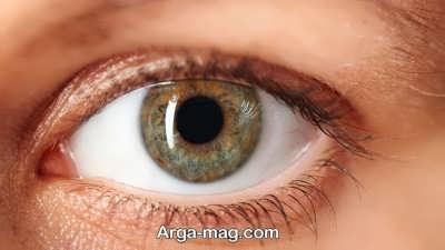 خصوصیات و دانستنی های چشم