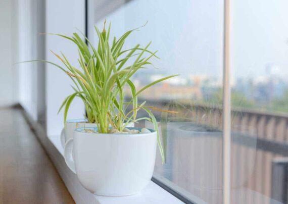 آشنایی با انواع گیاهان با رشد سریع