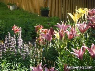 اصول پرورش گیاهان انرژی مثبت
