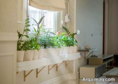 برای بالا رفتن میزان اکسیژن در منزل از گیاهان استفاده کنید.