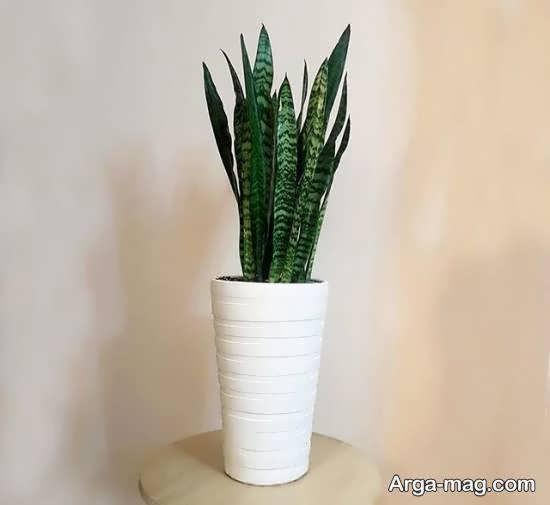 مجموعه اای دوست داشتنی از گلدان بلند