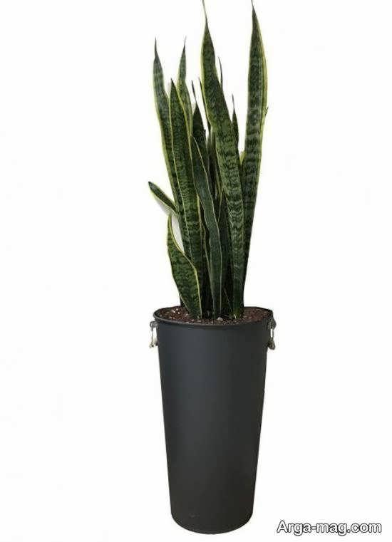 انواع مدل های شیک گلدان بلند