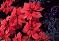آشنایی با گلهای دائمی باغچه