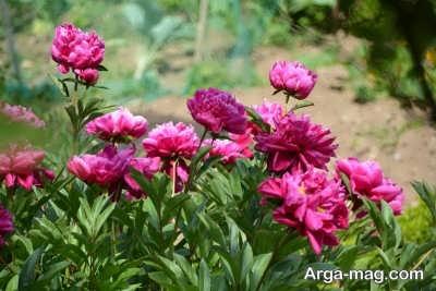 چگونگی پرورش گل های باغچه ای