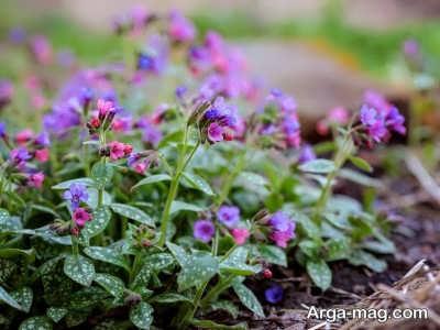 انواع گل های مناسب باغچه