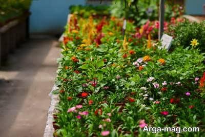 خصوصیات گلهای دائمی باغچه