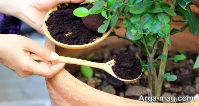 فواید کود قهوه برای گیاهان