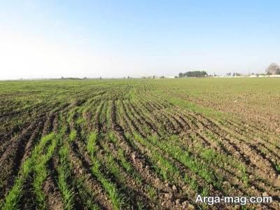 زمین کشاورزی و نحوه گرفتن سند آن
