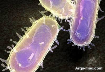 بررسی نشانه های متفاوت بیماری طاعون