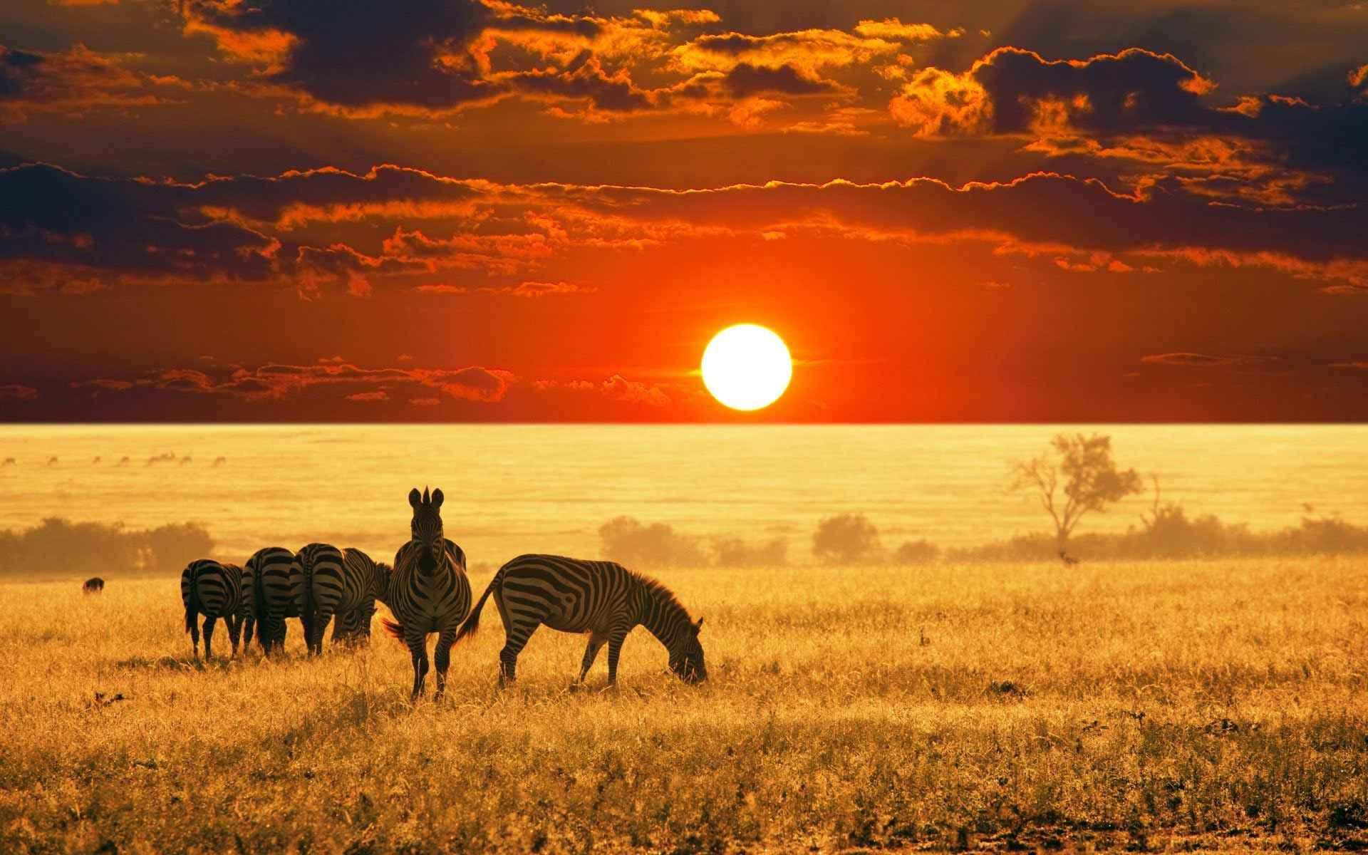 دیدنی های معروف تانزانیا