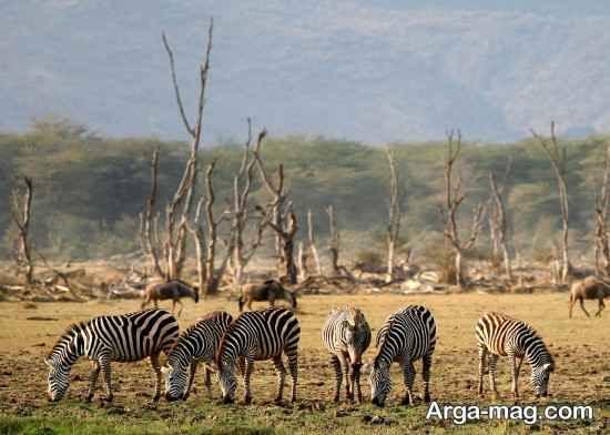 دیدنی های مهم تانزانیا