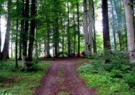 پارک جنگلی واز در مازندارن
