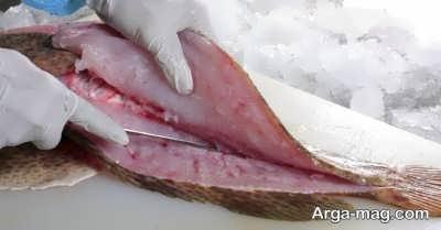 آموزش تمیز کردن ماهی